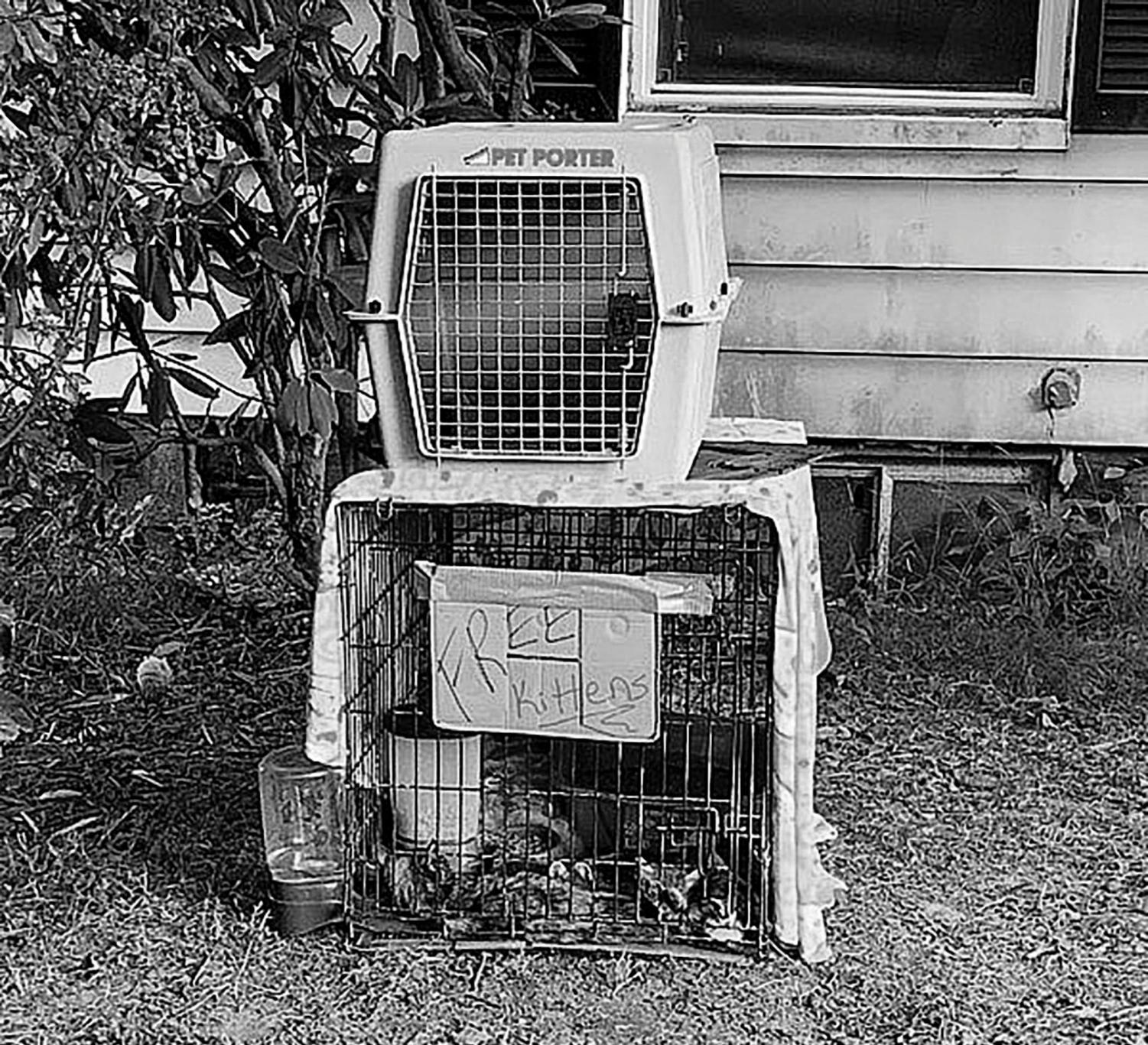 Students found a group of young kittens in this crate on Main Street this past weekend.